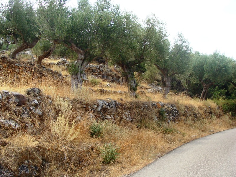 750m2 of building land facing the road leading from Proastio to Neochorio and cornering with footpath which also leads to Saidona.